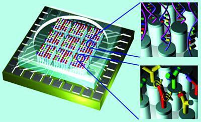 生物芯片的内部结构图