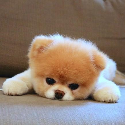 头痛可爱动物图片